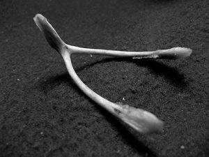 Making a wish with a wishbone